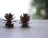 SPECIAL SPRING 500 Miniature Pine Cones DIY Mini Pinecones Rustic Shabby Chic Woodland Wedding Decorations Decor Party Supplies