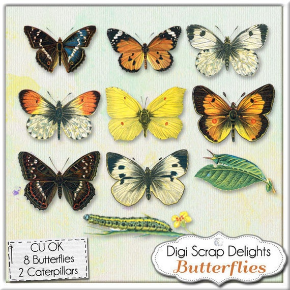 Butterfly Clip Art Set 3: Realistic Butterfly Digital Scrapbook Embellishments, Altered Art, Commercial Use CU, Instant Download