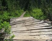 8x10 photograph: Rustic Forest Bridge. Footpath, greenery, pine trees, nature, wood, weathered, Washington, mountains, hiking