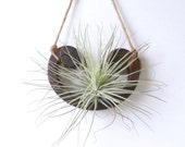 RESERVED FOR MISS T - Half-Moon Air Plant design - made in Brooklyn
