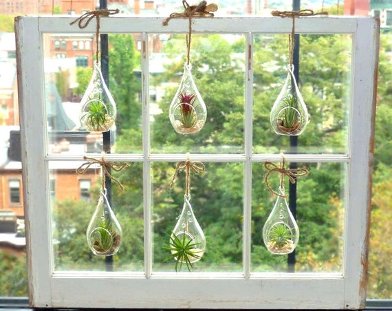 CUSTOM ORDER ---  RESERVED for Jocelyn - Six Air Plant Teardrops in beautifully aged window - made in Brooklyn