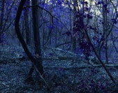 Night Forest ACEO art photography trading card UNIQUE gifts under 10