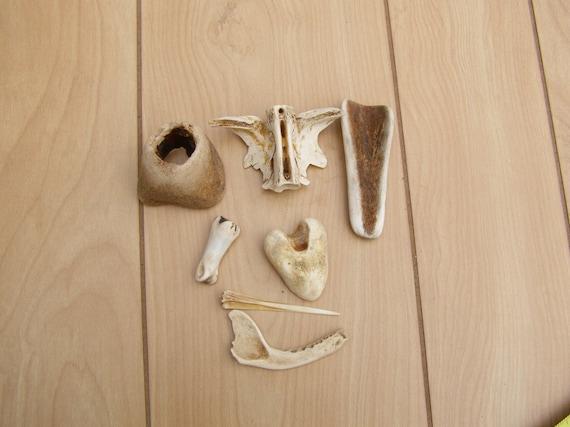 Bone Fragments Beach Finds