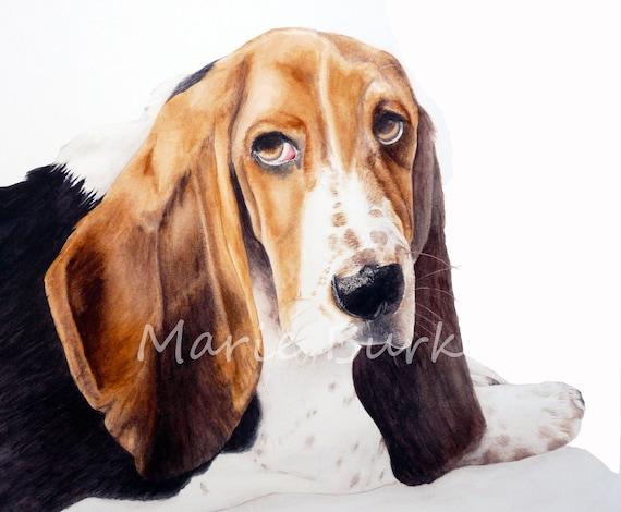 Rupert, the basset hound - fine art print, dog painting, dog watercolour, basset hound, watercolour, pets, pet painting, pet prints