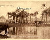 Old Egyptian postcard for digital download -  Pyramids and Palms C1918
