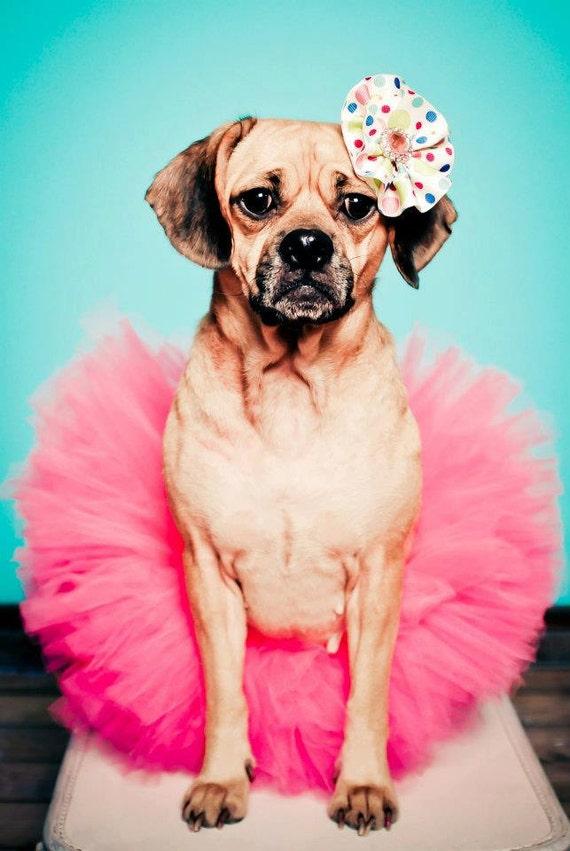 items similar to dog tutu puppy tutu pet photography prop