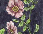 "fine art print, watercolor painting, wild rose 5""x 7"", art print"
