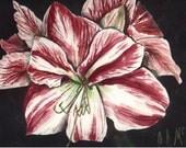 "fine art print, watercolor painting, amaryllis, 5""x7"", floral art print"
