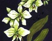 """fine art print, gouache painting, orchid painting, floral art, 5""""x7"""" art print"""