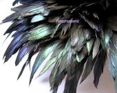 Natural Green Iridescent Bronze Rooster Feathers 6 to 8 inches long (15 to 20 cm) 1 Inch Strip - PudgyFeathers