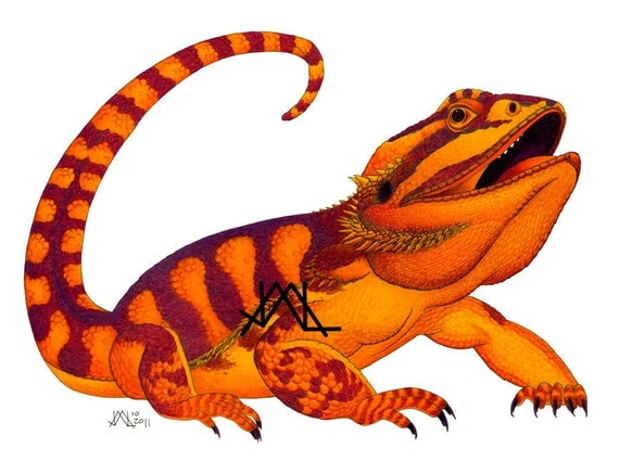 PRINT - Oaxacan Bearded Dragon original colored pencil painting, illustration, colorful animal art