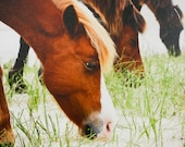 Giclee Canvas Wrap - Nature Photography Wild Horses 16x20 Gallery Wrap - Wild and Free I