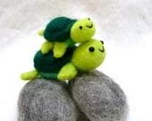 Turtles on stones