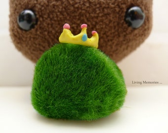 marimo kingdom gracious Queen - the living green moss ball