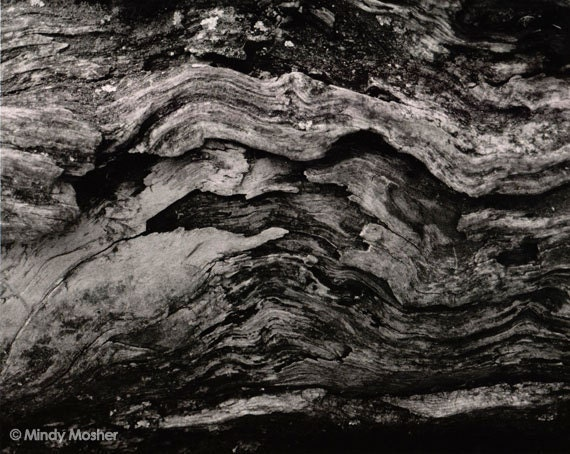 Tree Abstract 3 - Nature Film Photography