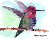 ACEO Limited Edition 7/10-  Hummer of Peace, in watercolor