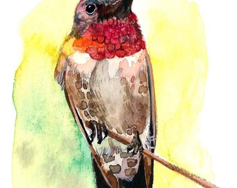 ACEO Limited Edition 3/25- Ruby-throated Hummingbird, in watercolor
