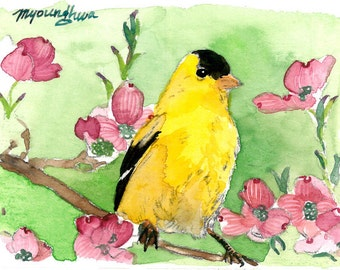 ACEO Limited Edition 3/25- Goldfinch Perched in a Dogwood