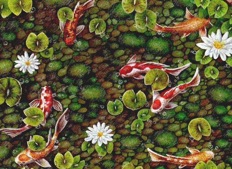 Koi fish koi pond art print nature prints koi home decor for Koi fish pond art