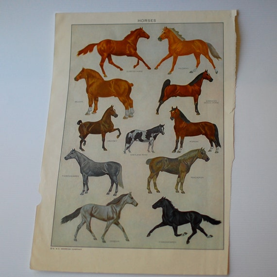 Horse Vintage Dictionary Art Print Color Plate Animal Decor 1950s Naturalistic Merriam-Webster