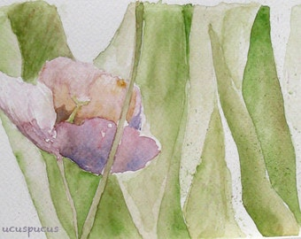 Mauve tulip - flower garden giclee print