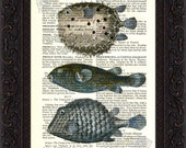 Exotic and Unusual Puffer  Fish Antique engraving Print on Vintage Repurposed Page mixed media  digital