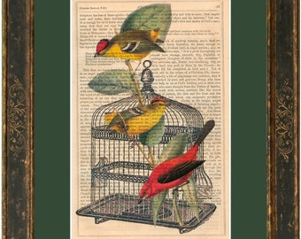 Tropical Birds and cage  print on vintage (1850's) upcycled book page