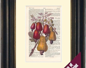 Cashew Nut Colour illustration Print on vintage upcycled page