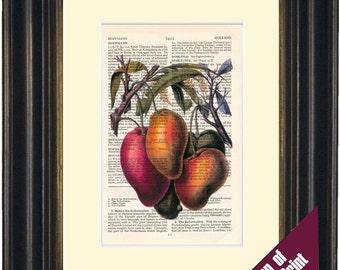 Mango Colour illustration Print on vintage upcycled page