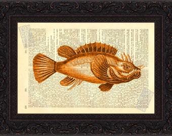 Scorpion Fish 2 Antique engraving ( 1800's ) Print on Vintage Repurposed Page