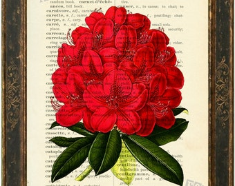 Rhododendron  Mixed Media Print on Upcycled   English French Lexicon Page