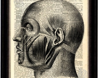 Engraving of Facial Muscles  Print on upcycled Latin English Dictionary Vintage Page