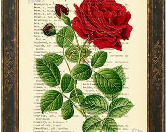 Red Rose  Print on Upcycled  English French English Lexicon Page mixed media  digital