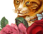 Cat with Blue Ribbon in Roses Vintage Antique Victorian Retro Art Print T-Shirt - Girl and Women White Tee Shirt XS, S, M