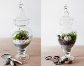 Choose your design- apothecary jar terrarium
