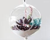 Teal maiden organic succulent hanging terrarium