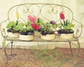 Photography 20x30cm Pink, Yellow, Red, Violet Hyacinths (Giacinti Rosa, Gialli, Rossi, Viola), Bench (Panchina), Shabby Chic, For Home Decor