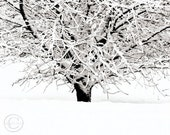 "Cherry Tree Print  8"" X 10""  Winter White Tree Print, White Snow, Cherries Wait"