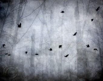 Blackbird Print, Surreal Flying Blackbirds, Mysterious Flock of Blackbirds, Bird Flock, Dark Forest, Foggy Forest, Foggy Woods
