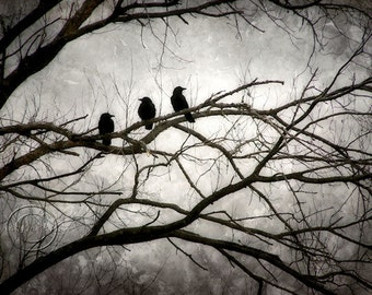 Crow Print, Surreal, Moonight and Crows, Black Crow Print, 3 Crows, Mysterious Crow Print, Moonlit Tree, Flock of Crows