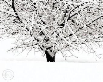 "Cherry Tree Print  8"" X 10""  Winter White Tree Print, White Snow, Cherries Wait"