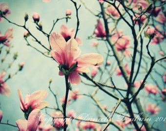 Flower Photography Magnolia Blossoms Pink Teal Blue Sky--Fine Art Nature Lomography 8x11