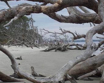 Driftwood Natural Frames 8x10, jekyll island, georgia, beach, overcast, sand, shapes, natural, outside, wall photo, fine art, print, gift