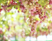 Grapes. Approximate size 20x30 cm. Israeli Photography - Israeli Decor - Home Decor.