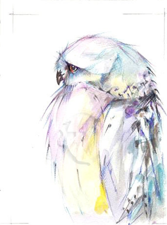 8x10 inch Snowy Owl  print from the original  painting