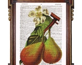 PEARS KITCHEN ART  Blossom Upcycled Art Print Illustration Upcycled Book Page Antique Vintage
