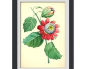 Boanical wall art.  8x11 botanical art print produced from a vintage book plate, #48 INSTANT DOWNLOAD