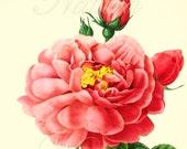 Botanical print 174, vintage botanical wall art, vintage illustration.