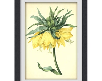 Botanical Print, Yellow Flower wall art, Instant Download printable art