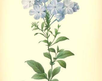 Botanical Print, printable art, vibrant vintage botanical ilustration produced from a book plate, No29